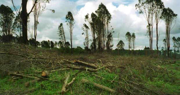 A logging site at Nesset, Mau Forest, Kenya. Humans are clearing a net 10 billion trees a year from the surface of the Earth.