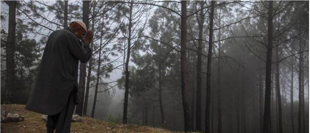 Pakistan's federal government plans to plant 100 million trees within five years.